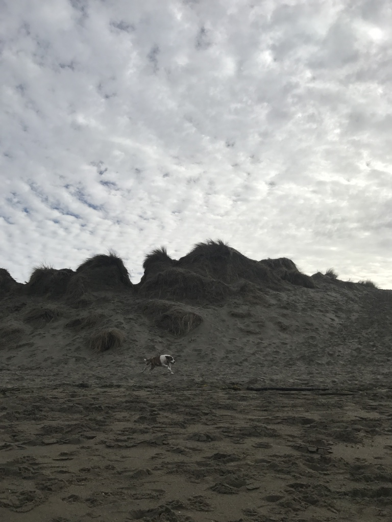 Beneath the Borealis Joni & Julia Part II Beach California Coast Bunny
