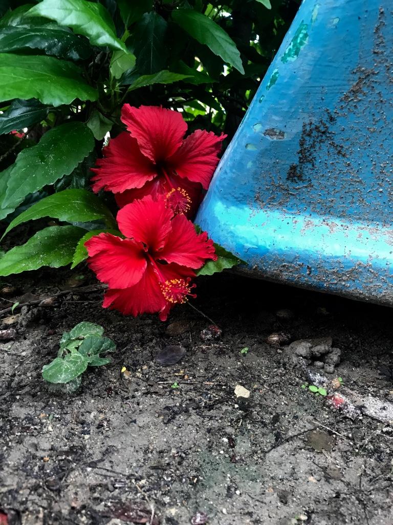 Beneath the Borealis February 9th 2018 A Reason A Season or A Lifetime Isla Corazon Tropical Flowers Ecuador.jpg