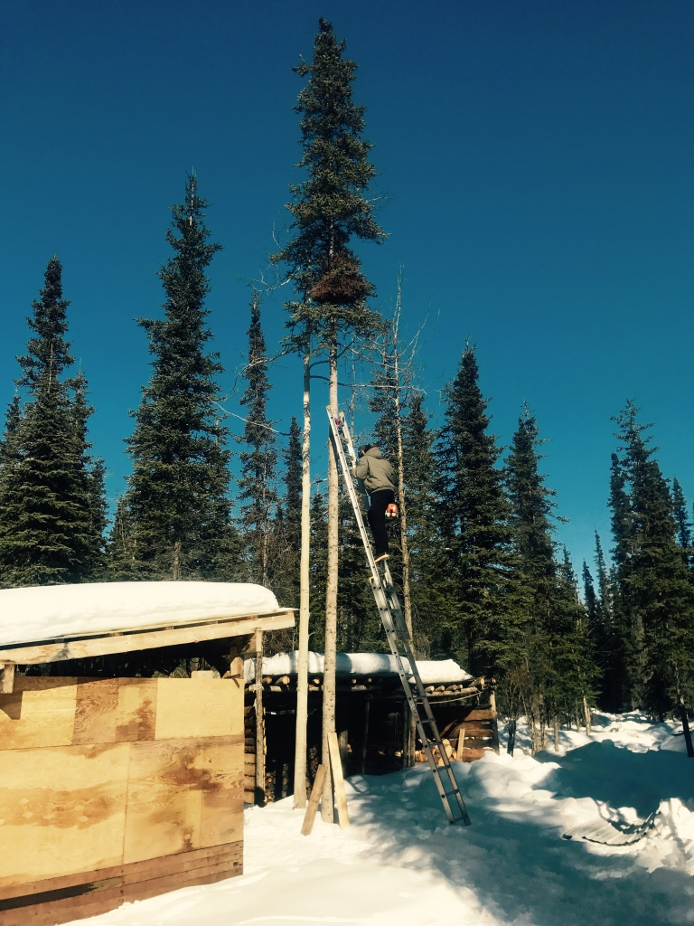 Beneath the Borealis Alaska Spring Cleaning Spring Fever 3-26-18 Stihl Saws