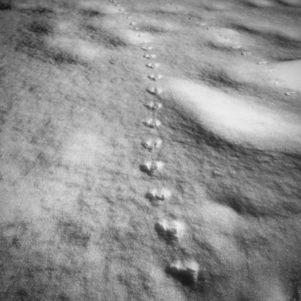 Beneath the Borealis - Snowtime Stories - 2-4-19 Animal Tracks of Alaska