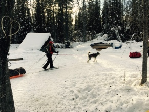 Beneath the Borealis In Celebration of Women Skijoring