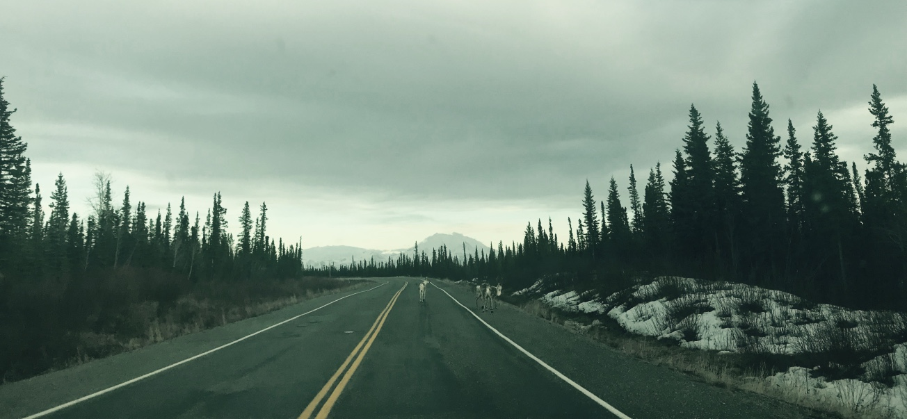Beneath the Borealis The Fluff Part II 04-22-19 Fairbanks, Alaska Caribou Crossing