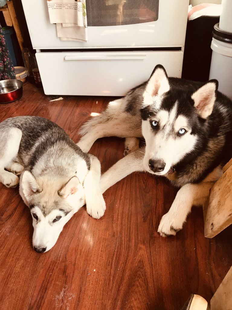 Beneath the Borealis 7-8-19, Six Funerals and a Wedding, Husky and Malamute holding hands