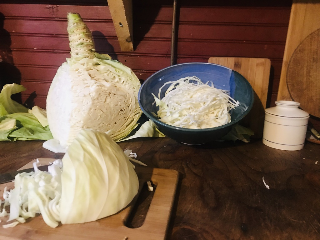 Beneath the Borealis, 11-11-19, Post Cabin Confessions, Putting Up, Alaskan cabbage harvest making Sauerkraut