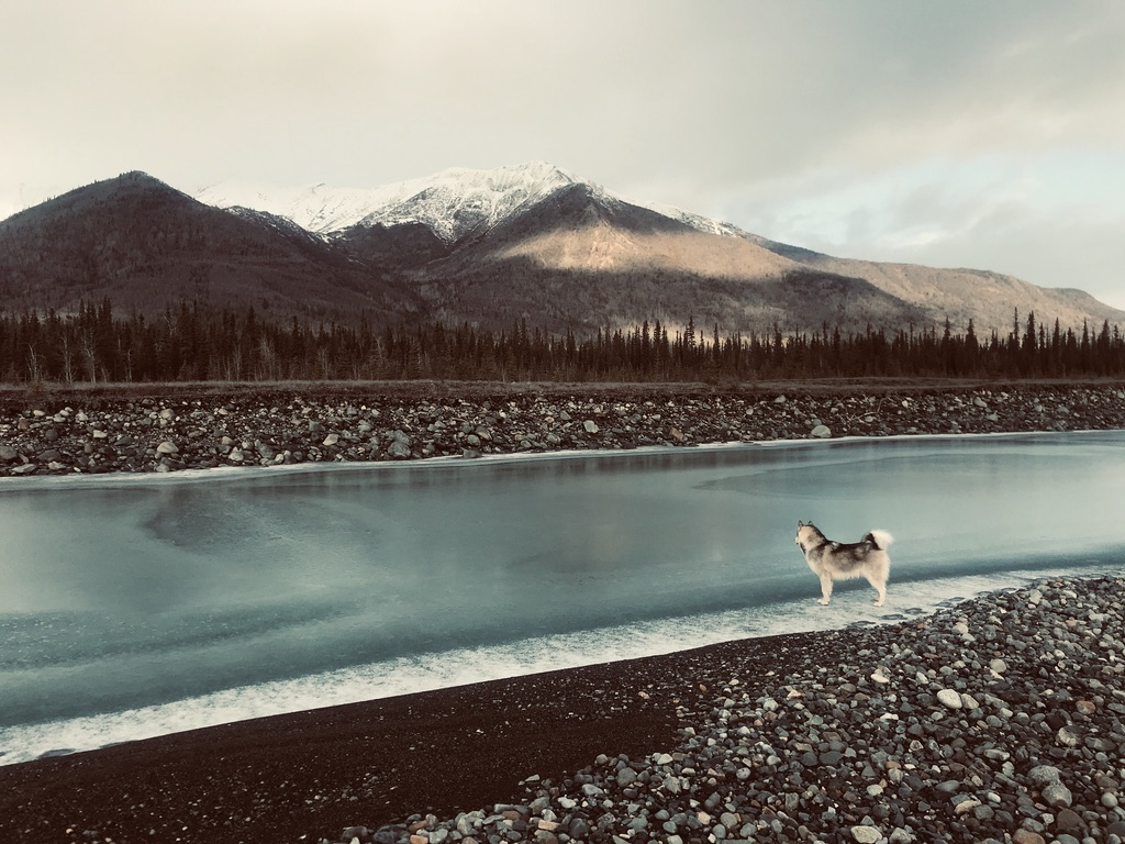 Beneath the Borealis, 11-11-19, Post Cabin Confessions, Putting Up, Leto the Alaskan Malamute