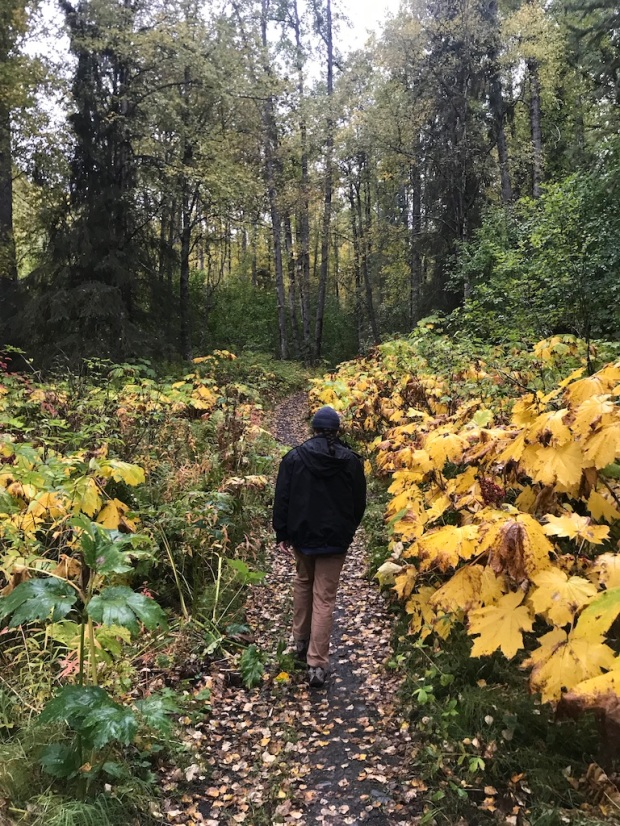 Beneath the Borealis, 11-25-19, Porcupup, Fall colors Alaska in September