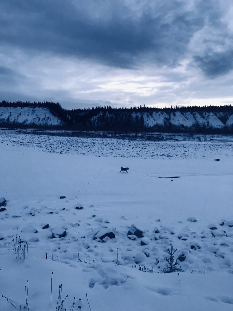 Beneath the Borealis, Welcome to Alaska, Enjoy Your Stay, Alaskan Malamute
