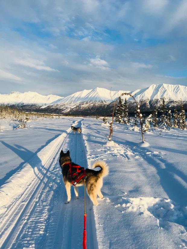 Beneath the Borealis, 40 Below (Alone), January 27th, 2020, Skijoring in Alaska