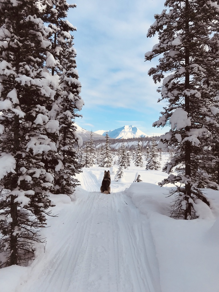 Beneath the Borealis Post Cabin Fever 02:24:20 Alaskan Malamute in Alaska in Winter
