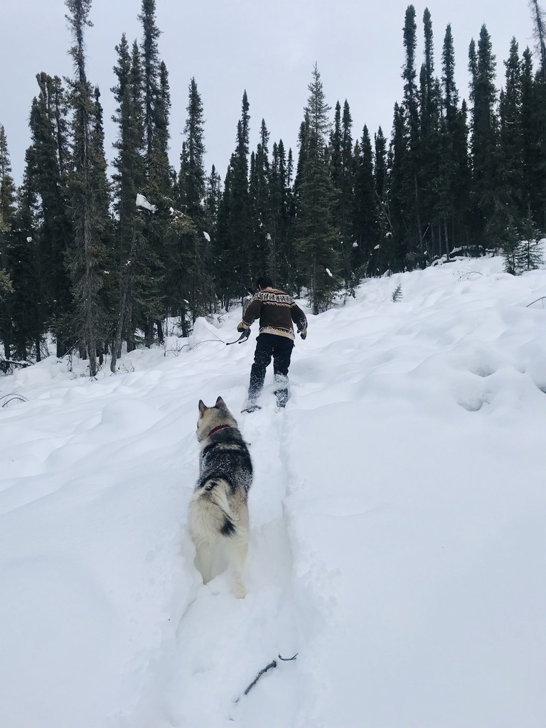 Beneath the Borealis, 03:09:20, The Sweetness of Saturdays, Snowshoeing in Alaska