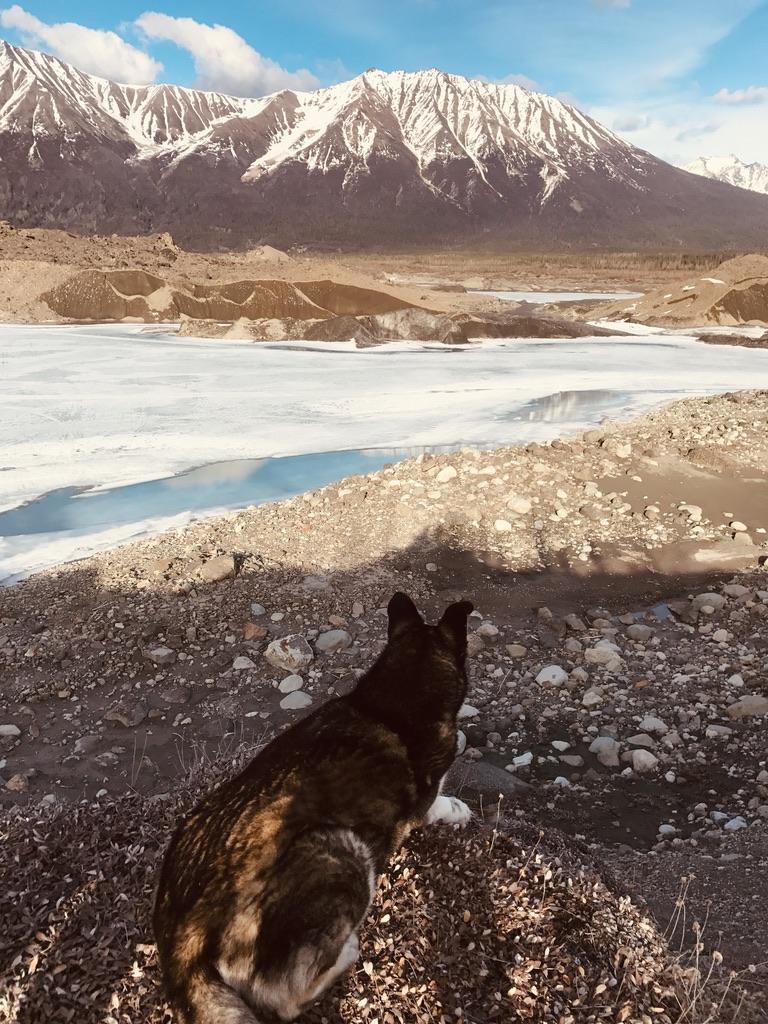 Beneath the Borealis, Alaskan Puppy Love, Cinda in Alaska