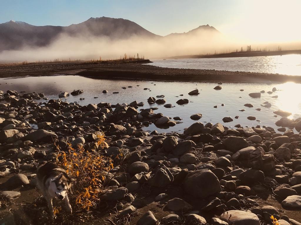 Beneath the Borealis, Alaskan Puppy Love, Shake it Off