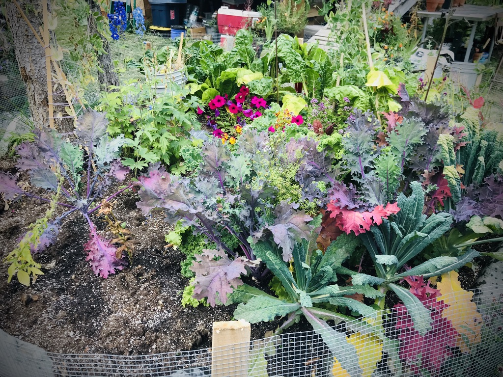 Gardening in Alaska 2019