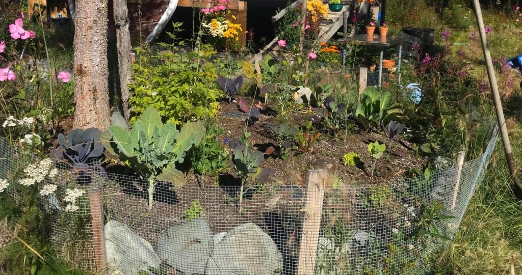Gardening in Alaska 2020
