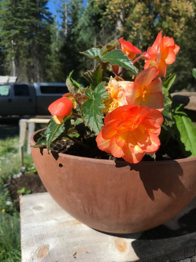 What vegetables grow best in Alaska