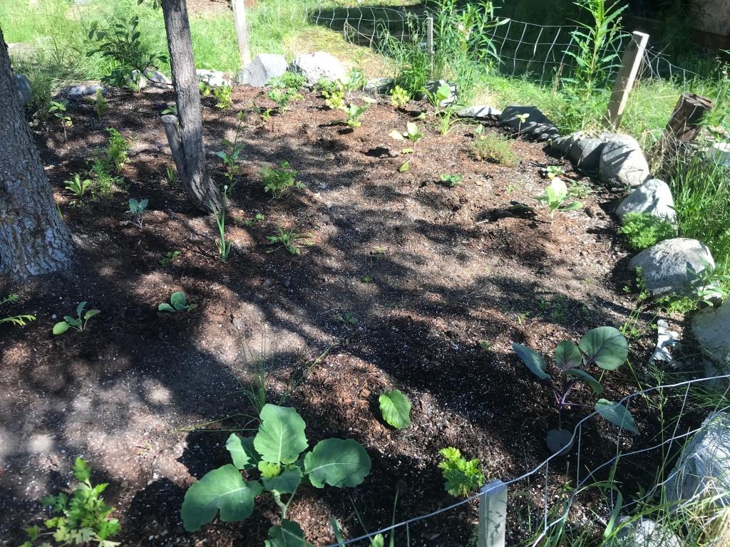 16 easy steps to gardening in alaska